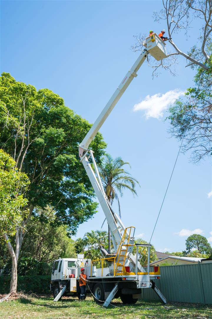 Cherry Picker Tall from Brisbane Tree Equipment Hire